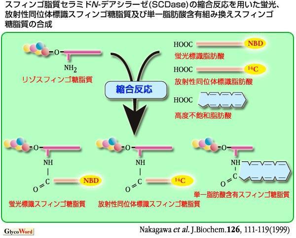 糖質科学のことば / Glycotechnology-B08